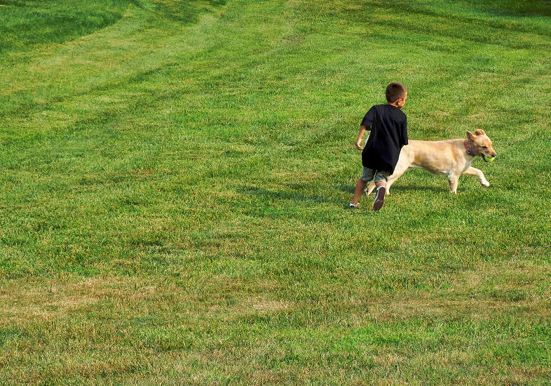 Little boy chases a lab holding a ball in its mouth on a grassy lawn. photo