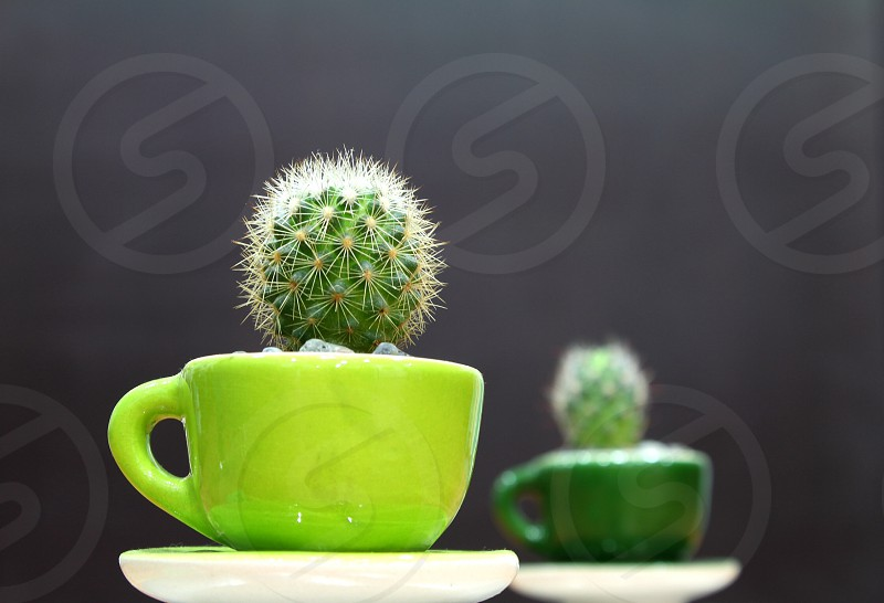 Green cactus cup plant photo
