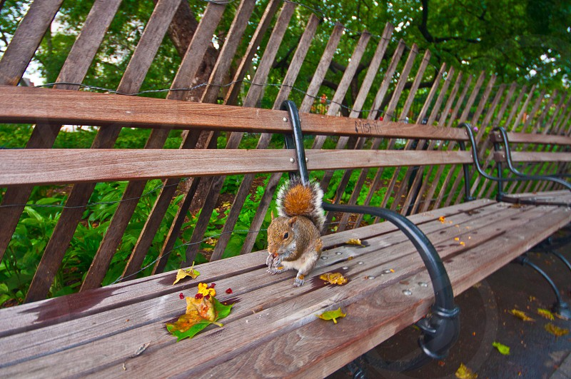Squirrel on bench photo