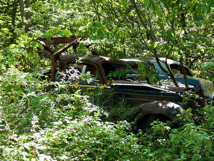 Trying to hide a car in the underbrush photo