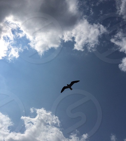 Solitary Seagull in the warm summer sky. Rehoboth Beach 2014.  photo