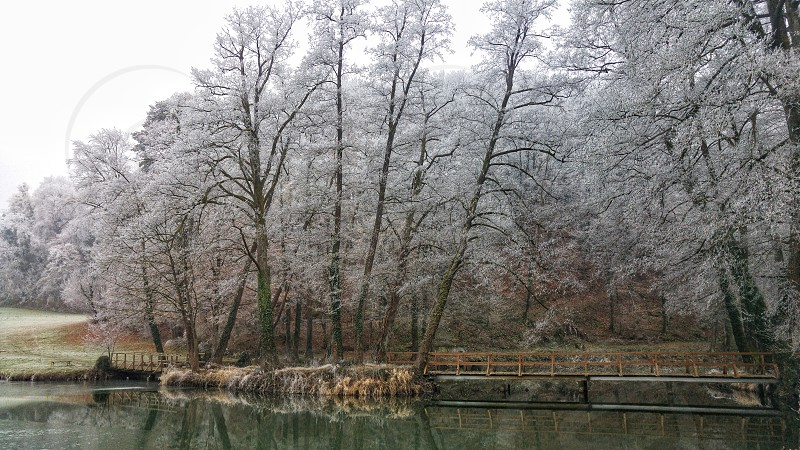 Frozen trees by a lake. Cold winter weather.  photo