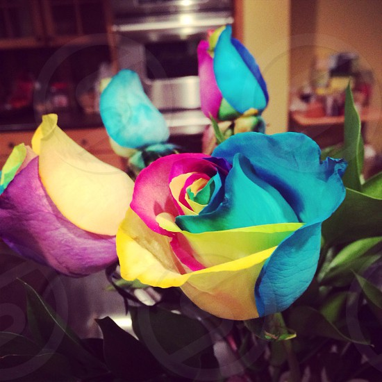 Birthday roses photo