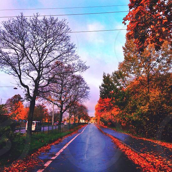 leaf littered street photo