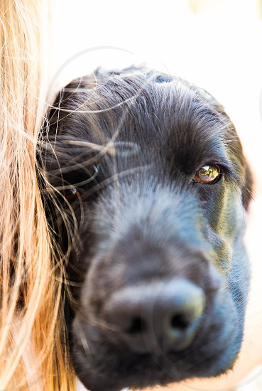 Dogs eye photo