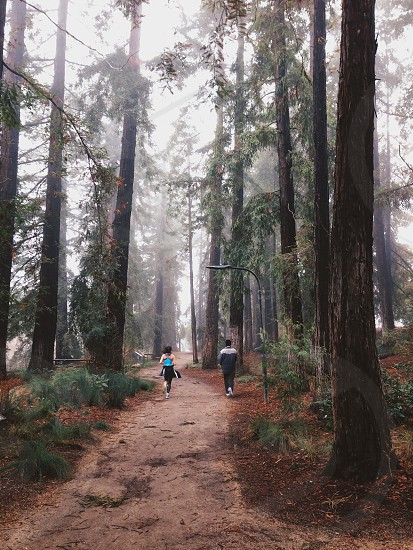 woman and a man jogging in the woods photo