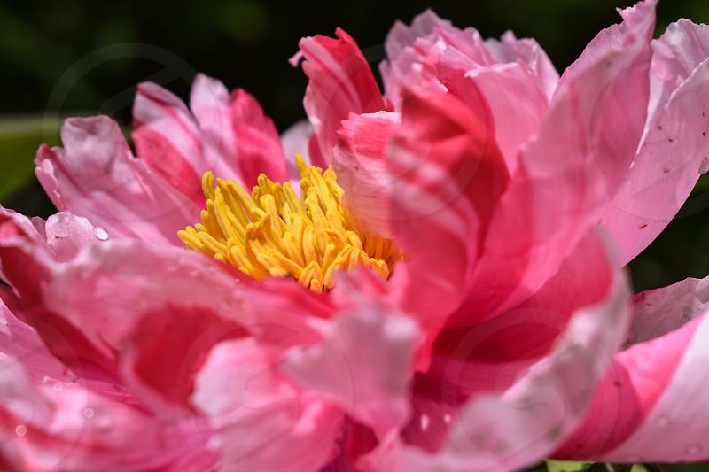 Detail shot of flower photo