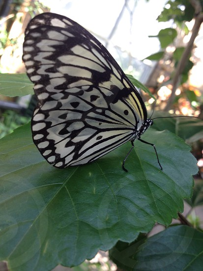 white and black butterfly on green leaves photo