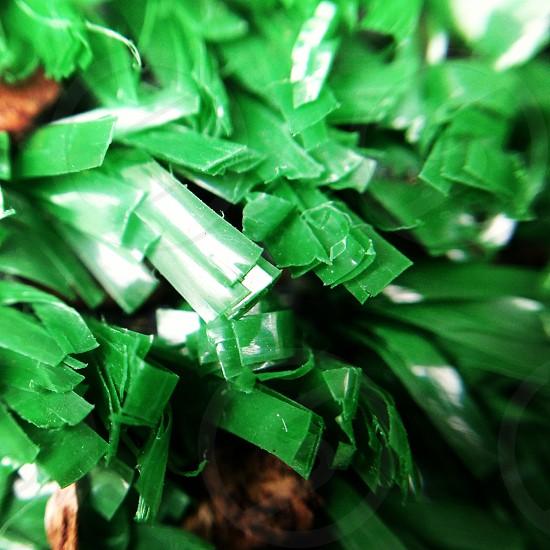 green plastic photo