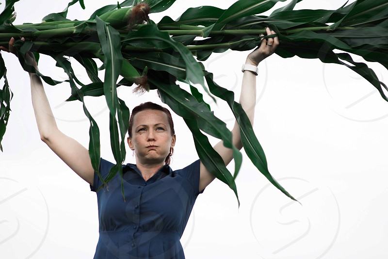 Harvesting corn food woman holding crop on field photo