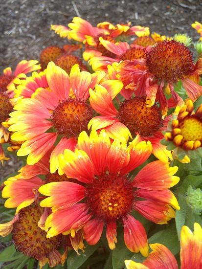 #findingamazing  flowers Bend Oregon  photo