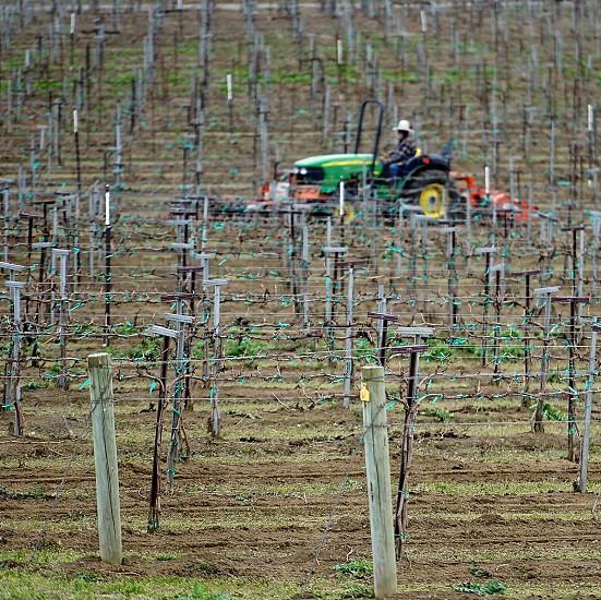wine grapes harvest farmer vintner tractor vines eastern washington mattawa new growth destination photo