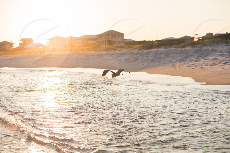 Beach sand fort Morgan gulf shores Alabama ocean laceybeth gulf coast Gulf of Mexico salt life salt water sunset bird golden hour photo
