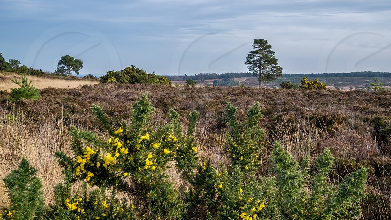 View of the Ashdown Forest in Winter photo