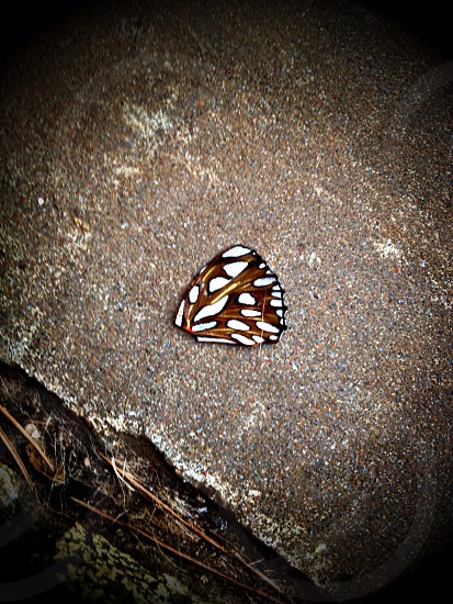 brown and white butterfly wing photo