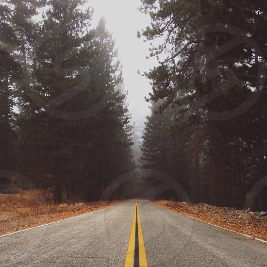 long forest road photo