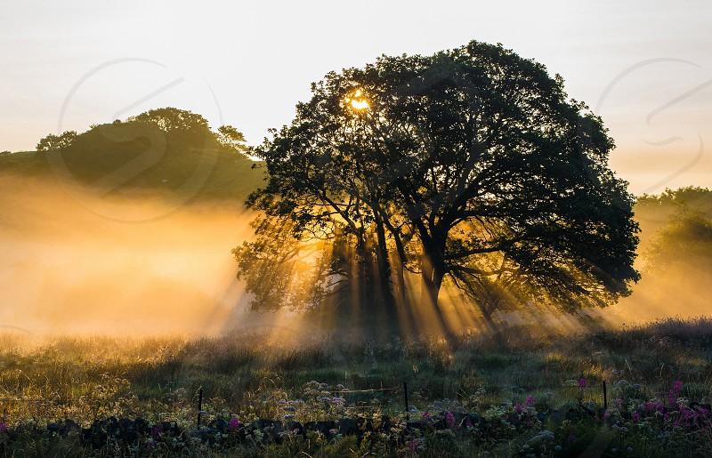Dawn Mist photo