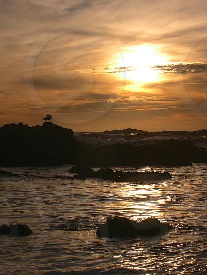Sunset Pacific Ocean Asilomar Beach bird preening waves photo