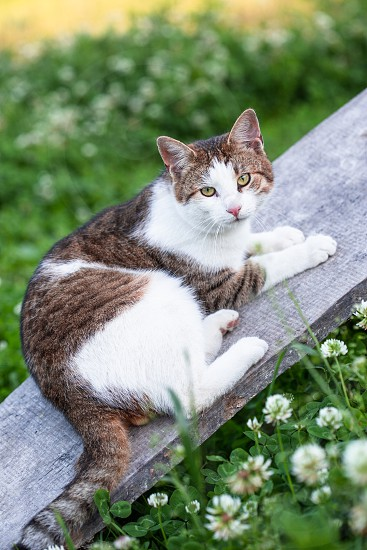 Cat lying on a plank in a garden looking at camera photo