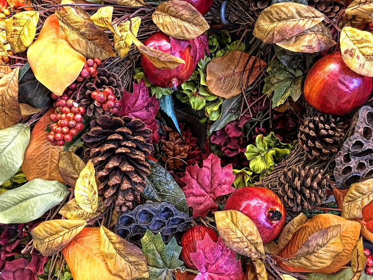 Colorful fall leaves photo