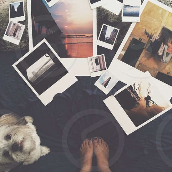 multicolored photos scattered on floor photo