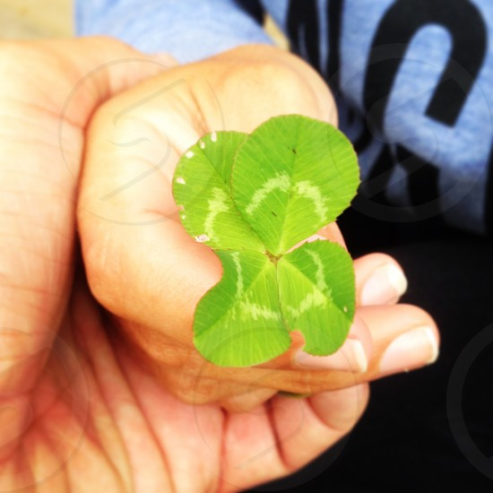 four leaf clover holding hands love luck photo