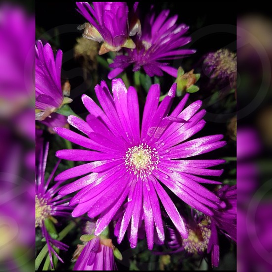 Flower ultraviolet photo