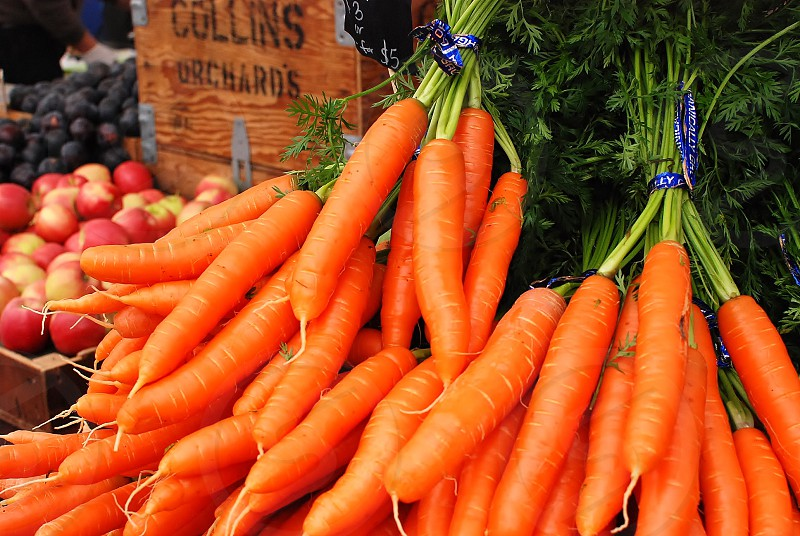 vegetable carrot farm food organic photo