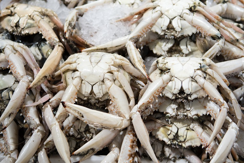 Fresh crab for sale at the modern fish market located in Dubai photo