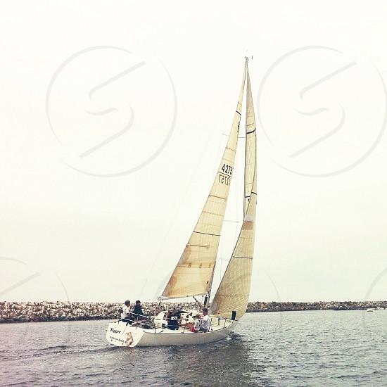 sailboat white photo
