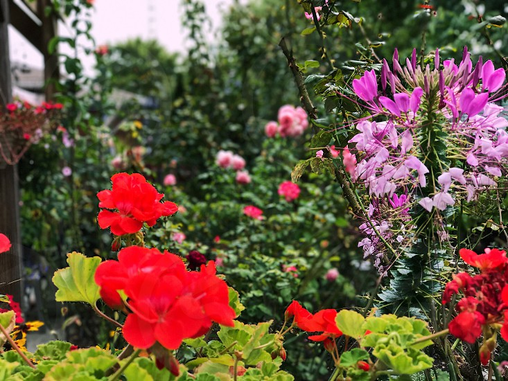Flower garden beautiful scenery backyard gardening photo