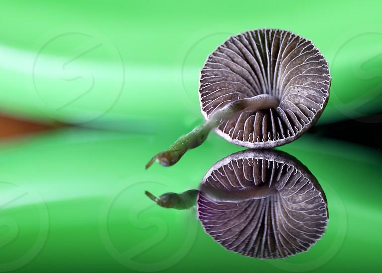 Fungus mushroom reflection symmetry photo