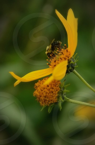 Busy Bee Pollination photo