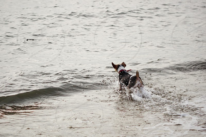 dog on sea photography photo