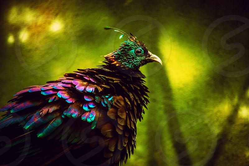 Bronx zooanimal bird photo