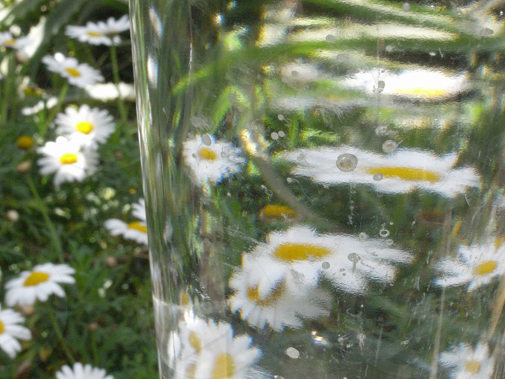 view of white flower reflection in glass photo