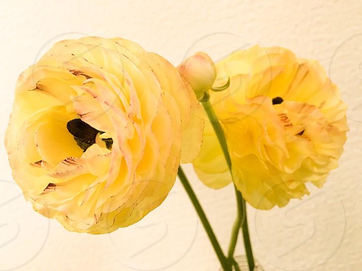 Flower yellow beautiful photo