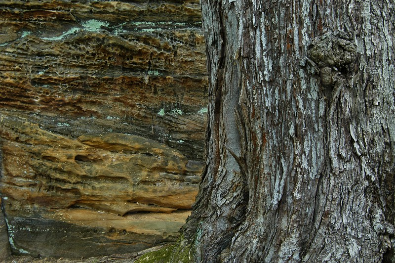 Tree. Stone. Bark. Grain. Rough. Texture. photo