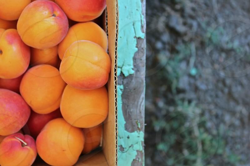 Fruit peaches fresh farm to table color orange photo