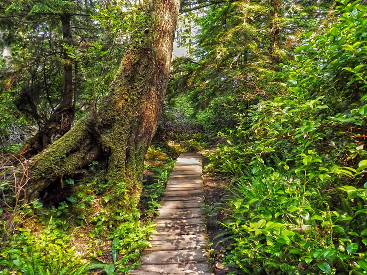 wooden path through the forest photo