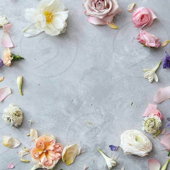 floral frame with roses and petals on gray concrete background photo