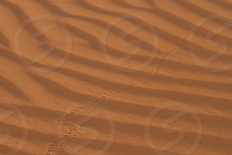 Beetle tracks across sand ripples photo