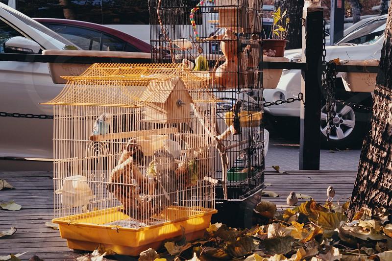 Bird cage freedom birdcage animal leaves autumn fly Beijing China Asia photo
