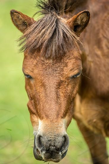 best brown fauna horse potrait wild wildlife zoo photo