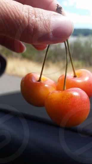 Ranier cherries road trip summer Fresh fruit Olympic Peninsula driving  photo