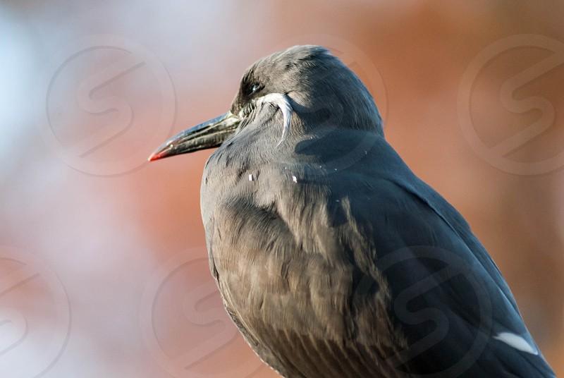 Bird watching photo