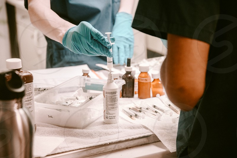 veterinary workers preparing medicine photo