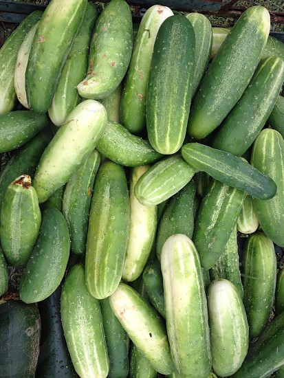 photography of bunch of cucumber photo