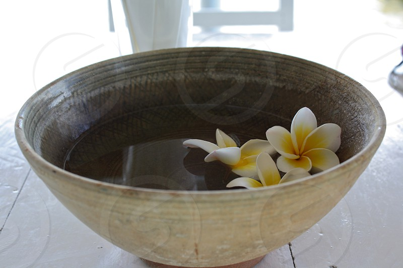 white and gray bowl with plumeria flowers on it photo