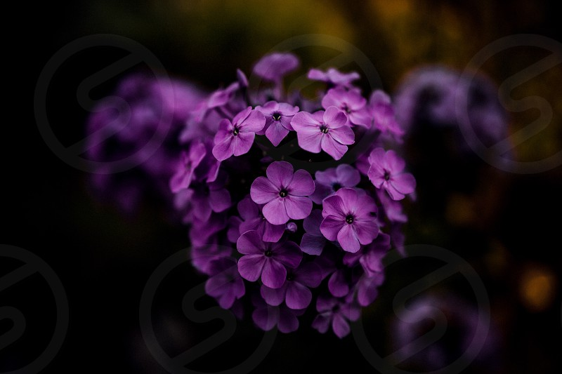 selective focus photography of purple petaled flower photo